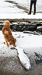 BB_20160213_0104 / Canis lupus familiaris / Hund <br /> Gadus morhua / Torsk