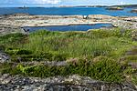 BB_20160612_0193 / Calluna vulgaris / Røsslyng <br /> Juniperus communis / Einer