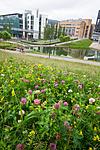 BB_20160624_0021 / Lathyrus pratensis / Gulflatbelg <br /> Trifolium hybridum hybridum / Alsikekløver <br /> Trifolium pratense / Rødkløver <br /> Trifolium repens / Hvitkløver