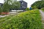 BB_20160624_0026 / Lathyrus pratensis / Gulflatbelg <br /> Trifolium hybridum hybridum / Alsikekløver <br /> Trifolium pratense / Rødkløver <br /> Trifolium repens / Hvitkløver