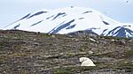 BB_20160719_0028 / Ursus maritimus / Isbjørn