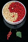 BB_20160807_0023 / Ribes rubrum / Hagerips