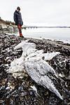 BB_20180107_0008 / Fulmarus glacialis / Havhest