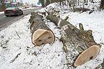 BB_20181215_0012 / Quercus robur / Sommereik