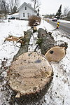 BB_20181215_0025 / Quercus robur / Sommereik