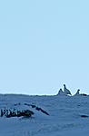 DSC_1535 / Lagopus muta / Fjellrype