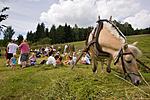 KA_06_1_0908 / Equus caballus / Hest