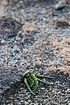KA_07_1_1319 / Salicornia europaea / Salturt