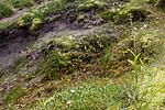 KA_07_1_1500 / Epipactis atrorubens / Rødflangre