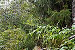 KA_07_1_1600 / Cinna latifolia / Huldregras