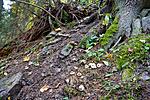 KA_07_1_1782 / Geastrum fimbriatum / Brun jordstjerne