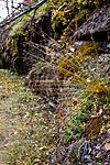 KA_08_1_2120 / Carex capillaris / Hårstarr