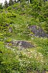 KA_090603_1111 / Drymocallis rupestris / Hvitmure