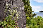 KA_090603_1130 / Drymocallis rupestris / Hvitmure
