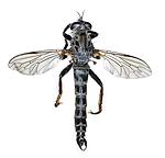 KA_090914_variabilis_male_dorsal / Rhadiurgus variabilis / Dovrerovflue