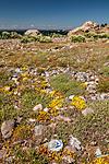 KA_110612_2914 / Sedum acre / Bitterbergknapp