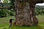 KA_110630_1923 / Quercus robur / Sommereik