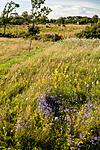 KA_110726_7566 / Campanula rotundifolia / Blåklokke <br /> Galium verum / Gulmaure