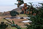 KA_111104_4260 / Picea sitchensis / Sitkagran