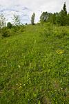 KA_120614_2609 / Platanthera montana / Grov nattfiol