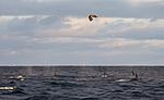KA_130204_0346 / Haliaeetus albicilla / Havørn <br /> Orcinus orca / Spekkhogger