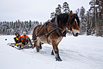 KA_130208_1058 / Equus caballus / Hest