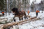 KA_130208_1077 / Equus caballus / Hest