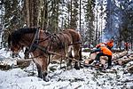 KA_130208_1082 / Equus caballus / Hest