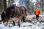 KA_130208_1084 / Equus caballus / Hest