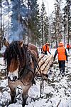 KA_130208_1088 / Equus caballus / Hest