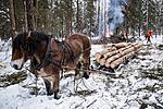 KA_130208_1092 / Equus caballus / Hest