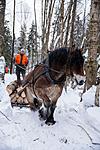 KA_130208_1095 / Equus caballus / Hest