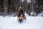 KA_130208_1098 / Equus caballus / Hest