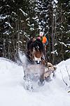 KA_130208_1102 / Equus caballus / Hest