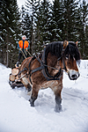 KA_130208_1104 / Equus caballus / Hest