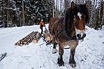 KA_130208_1113 / Equus caballus / Hest