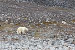 KA_130815_2810 / Ursus maritimus / Isbjørn