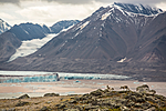 KA_130817_3524 / Vulpes lagopus / Fjellrev
