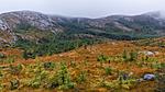 KA_131008_4515 / Picea sitchensis / Sitkagran