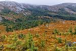 KA_131008_4516 / Picea sitchensis / Sitkagran