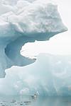 KA_140610_2120 / Fulmarus glacialis / Havhest