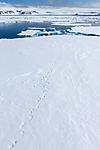 KA_140612_3904 / Ursus maritimus / Isbjørn