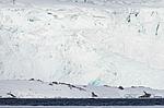KA_140614_4648 / Ursus maritimus / Isbjørn