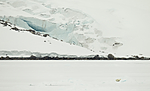KA_140614_4780 / Ursus maritimus / Isbjørn