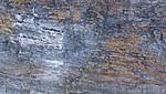 KA_140615_5050 / Uria lomvia / Polarlomvi