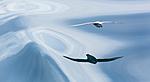 KA_140616_5328 / Fulmarus glacialis / Havhest