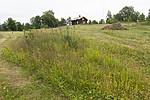 KA_140706_6054 / Knautia arvensis / Rødknapp