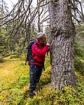KA_141006_4352 / Picea abies / Gran