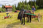 KA_150730_107 / Equus caballus / Hest