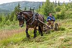 KA_150730_182 / Equus caballus / Hest